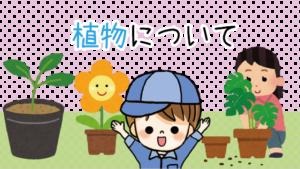 植物について