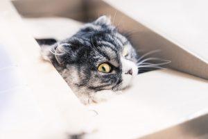 引越しラクっとNAVIで準備する様子を伺う猫