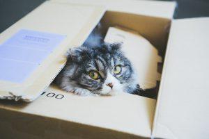 アイル引越センターで引越ししている猫