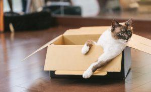 飼い主と引越し準備をしているかわいい猫